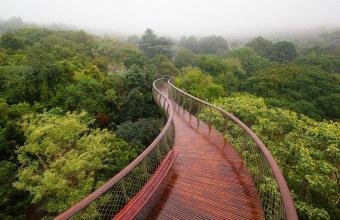 Hai la o plimbare printre vârfurile copacilor: Câteva dintre cele mai frumoase poteci suspendate din lume
