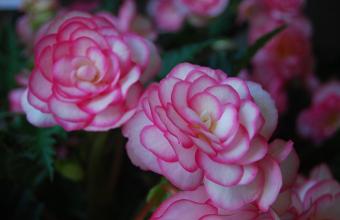Flori si plante la ghiveci